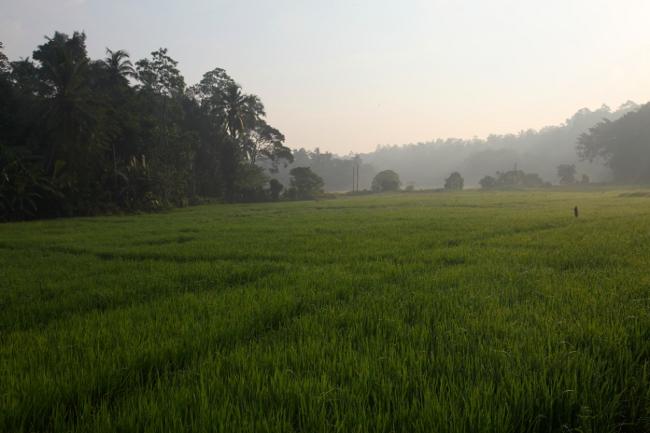 SriLanka_02_03